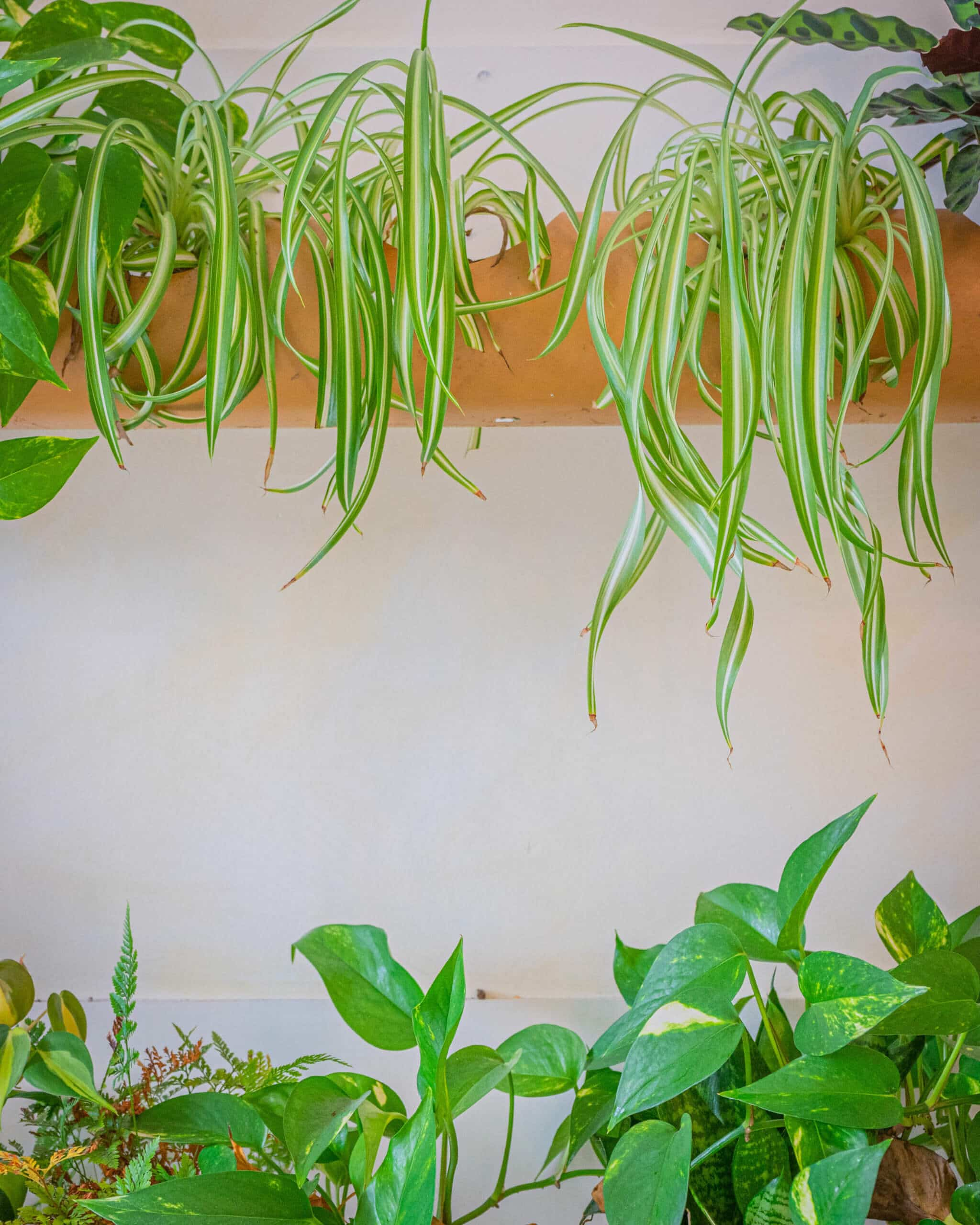 The 7 Best Houseplants if you have a Black Thumb | Carpe Diem Cleaning